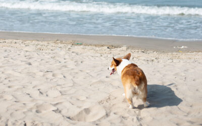 Three Dog Beaches Near You